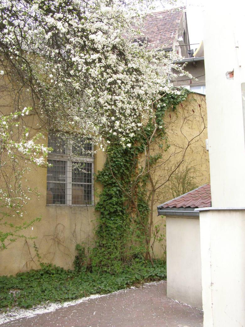 Przydomowe ogródki w Bydgoszczy: urosną klomby albo plomby