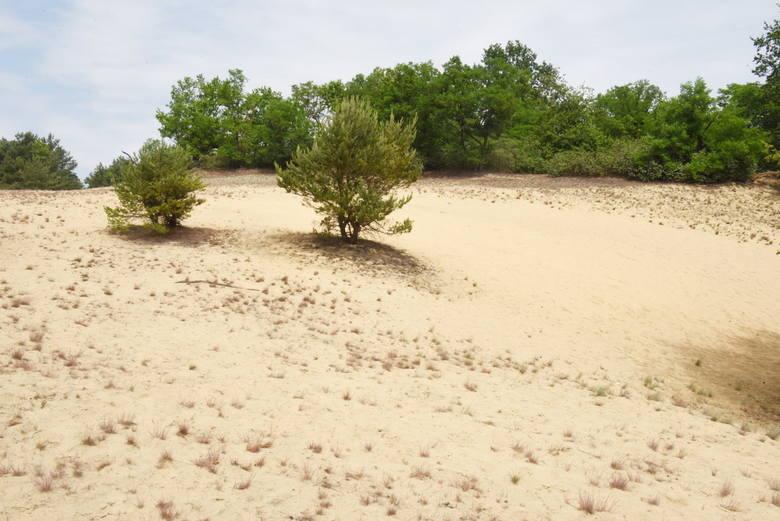 Być może nie wszyscy wiedzą, ale Bojadła leżące w powiecie zielonogórskim mogą poszczycić się wydmami śródlądowymi. Są to piaszczyste pagórki zbudowane