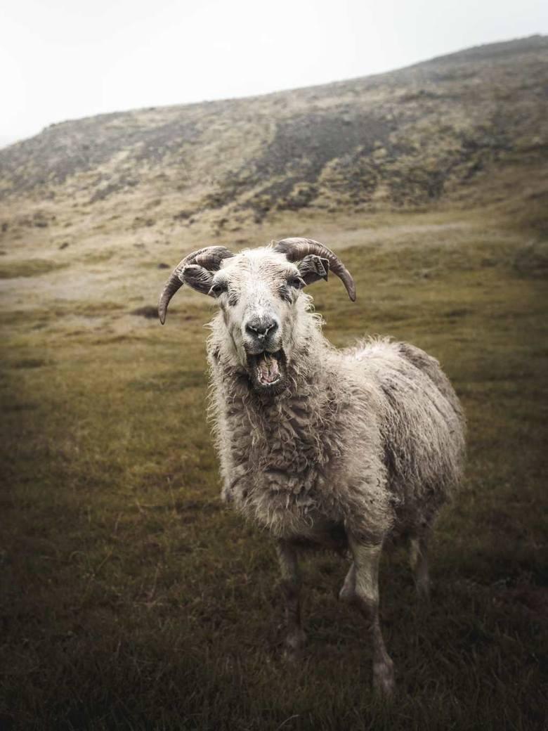 Mirek Tran wyjechał na daleką Islandię, by móc wrócić