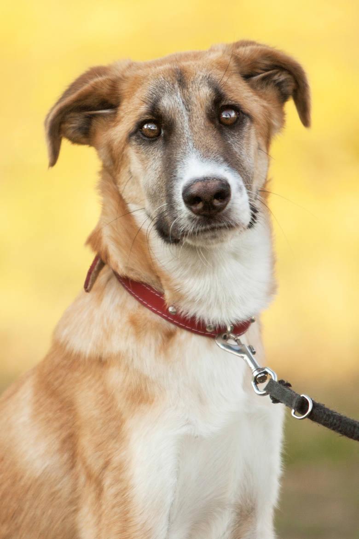 Jogi, pies, nr  ew. 2173/16Jogi jest jeszcze szczeniaczkiem, ma problemy z chodzeniem.  Są one prawdopodobnie wynikiem wad rozwojowych i zaniedbania