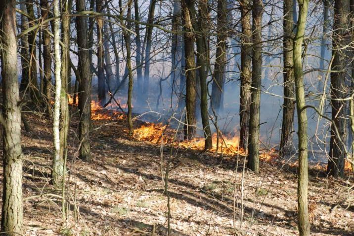 Od początku tego roku do końca lipca tereny leśne Regionalnej Dyrekcji Lasów Państwowych w Poznaniu płonęły aż 205 razy. Spłonęło łącznie 84 hektarów