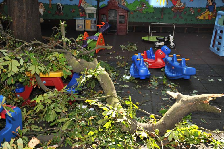 Dwa zdrowe drzewa z podwórka przedszkola na starówce idą pod topór. W sierpniu w tym miejscu na bawiące się dzieci spadł potężny konar z jednego z nich.