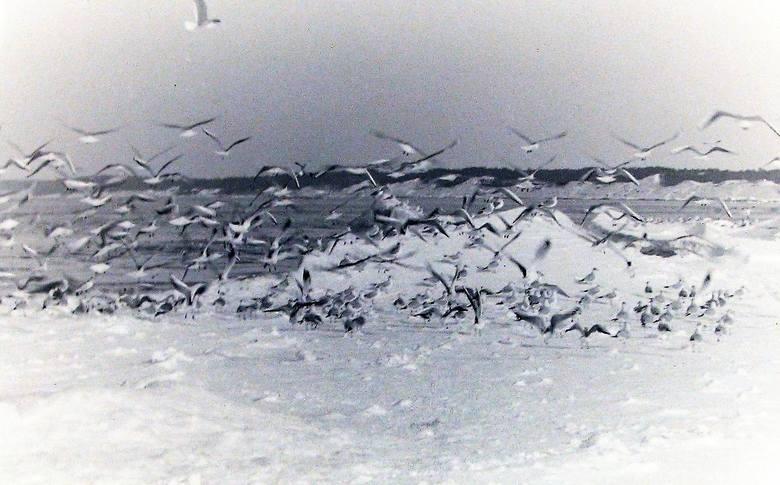 Widać jakie były zwały lodu na brzegu, górala to zachwycało.