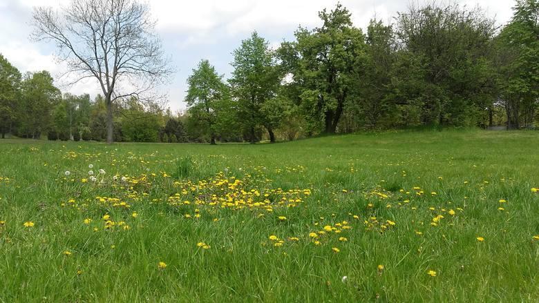 Zarząd Zieleni Miejskiej wskazuje także, że łąka kwietna powstała również na Cytadeli.