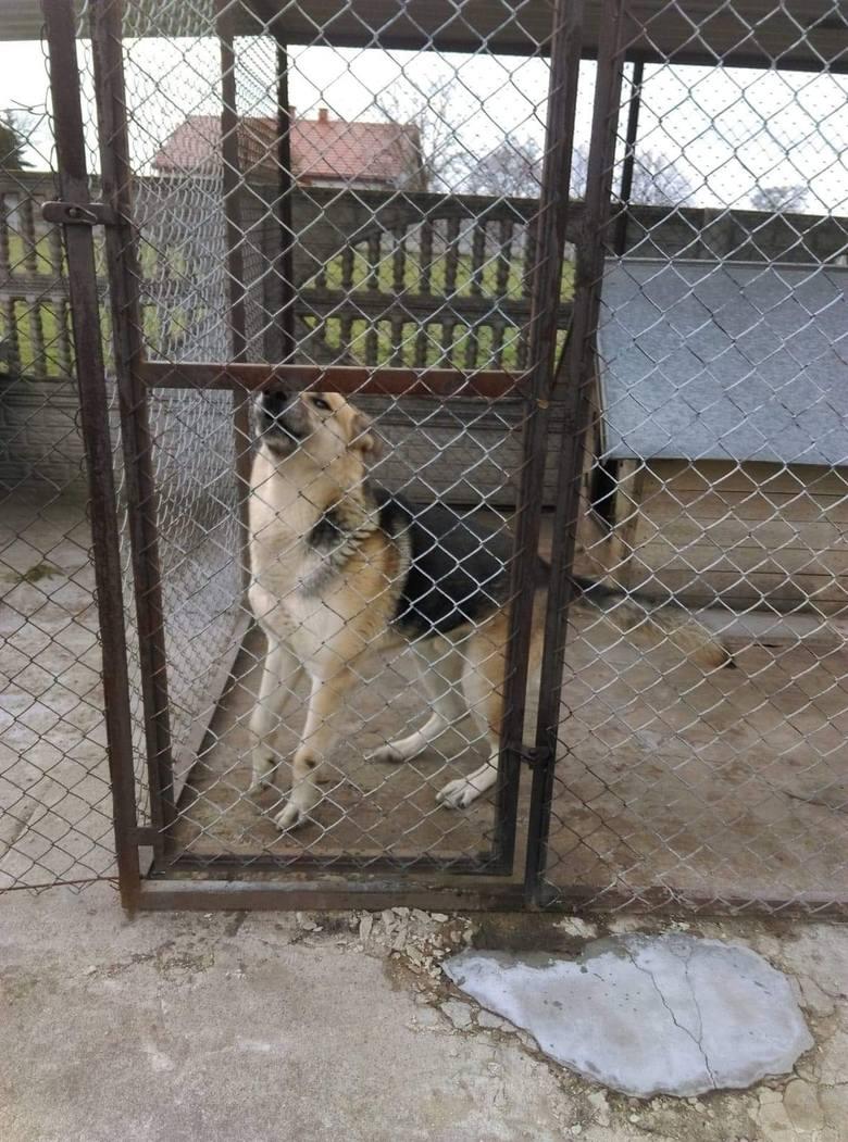 Fundacja Mondo Cane interweniowała w jednej z parafii w powiecie włocławskim w sprawie zaniedbanej suczki. W kojcu obok znajdował się zadbany pies