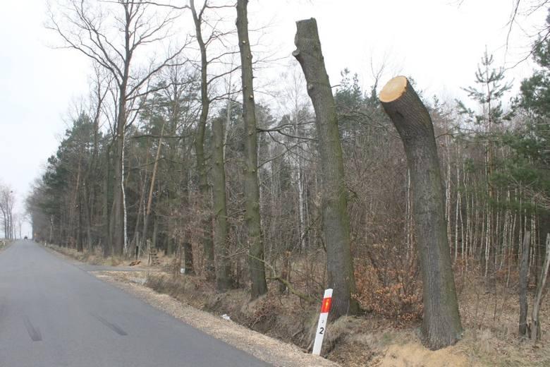 Upiornie wygląda świeżo wyremontowana  droga powiatowa z Chudoby do Lasowic Wielkich. Po jednej stronie ścięto wiele dużych drzew. Po drugiej strony