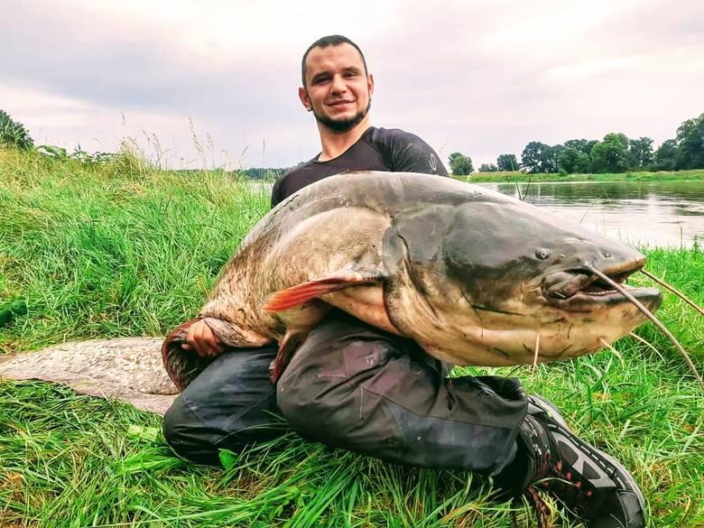 To nie fotomontaż! Pan Czarek z Trzebiechowa łowi takie okazy w Lubuskiem. Od trzech lat wyciąga z Odry sumy-giganty
