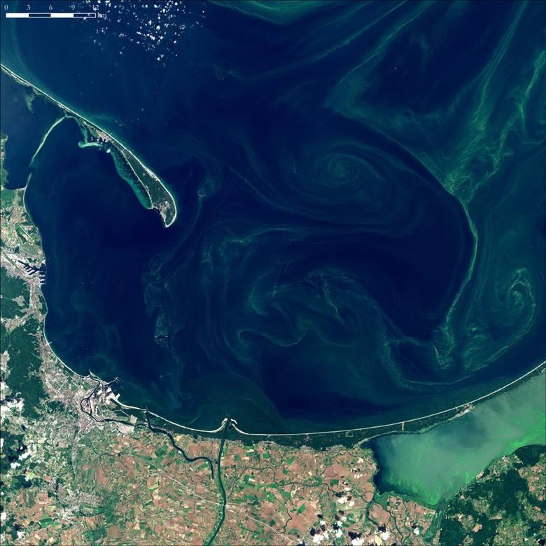 15 lipca 2019. Zakwit sinic w Zatoce Gdańskiej