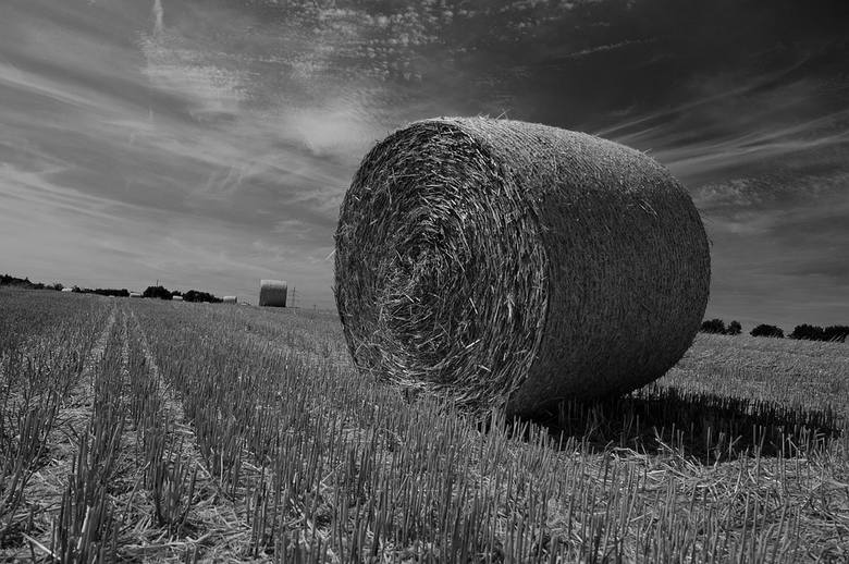 Na suszy, tak jak na ulewach, cierpią przede wszystkim producenci zbóż