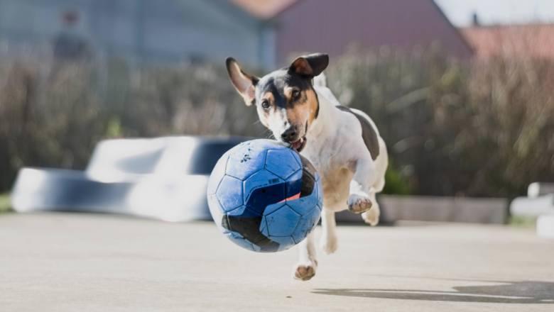 Twojego psa roznosi energia? Te psie sporty pomogą ją rozładować!