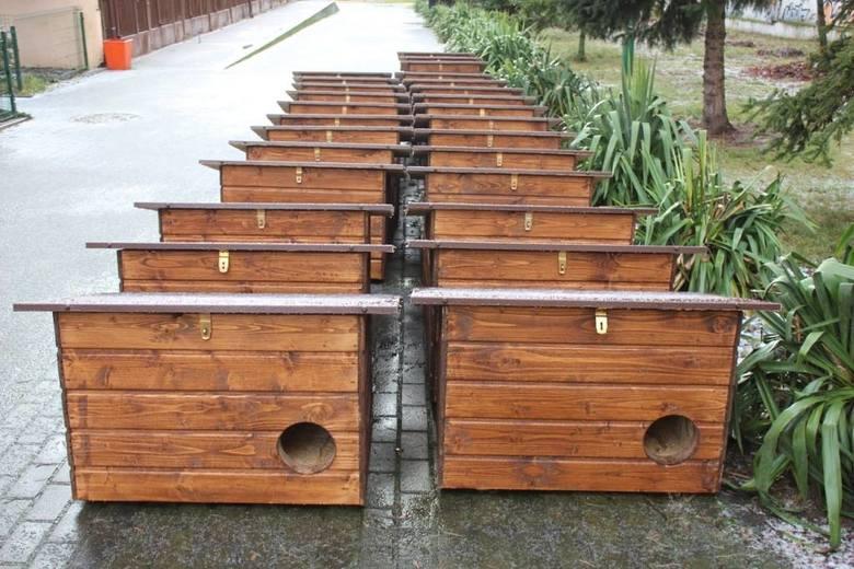 Poznań: Stawiają domki dla wolno żyjących kotów