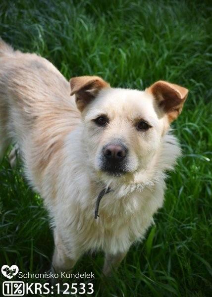 Dyzma ma 6 lat. Jest to średniej wielkości, przyjazny, szorstkowłosy pies o biszkoptowym umaszczeniu.