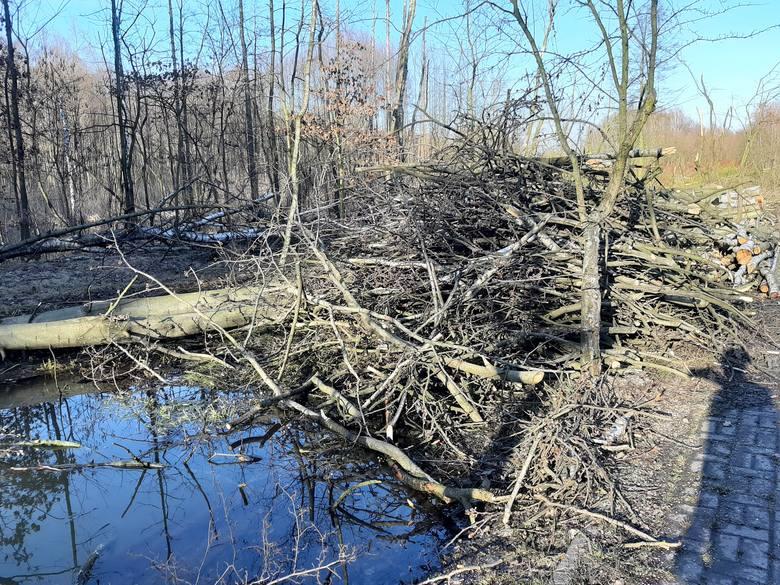 Przy rolkostradzie w Dolinie Trzech Stawów wycięto kilkadziesiąt drzew.