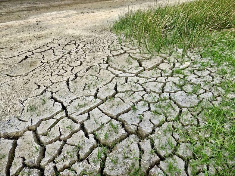 Po trzeciej z rzędu bezśnieżnej zimie opadów było jak na lekarstwo. Według Instytutu Meteorologii i Gospodarki Wodnej przełom 2019 i 2020 roku był najcieplejszy
