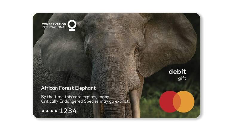 Słoń leśnyW ciągu ostatnich 31 lat populacja tych wysoce inteligentnych zwierząt zmniejszyła się o 86% z powodu kłusownictwa, wylesiania, wydobycia i