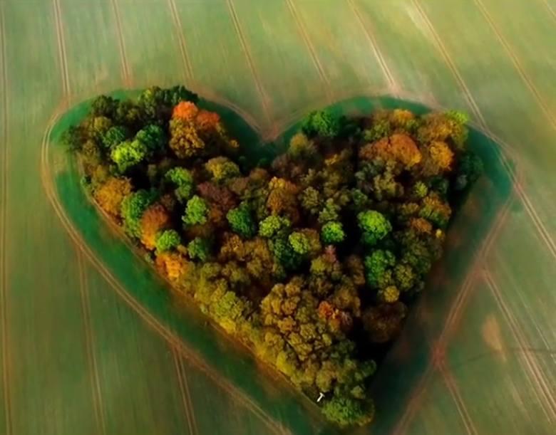 To wyjątkowe miejsce pod Wrocławiem internauci nazwali Zagajnikiem Miłości. Cały świat podziwiał je na Instagramie i Facebooku, gdy wiosną zakwitł tu