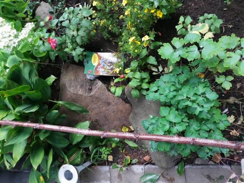 Dosadzając np. wiosenne rośliny cebulowe można zrobić zdjęcie, kładąc opakowanie (lub kartkę z nazwą), w miejscu, gdzie je posadziliśmy.