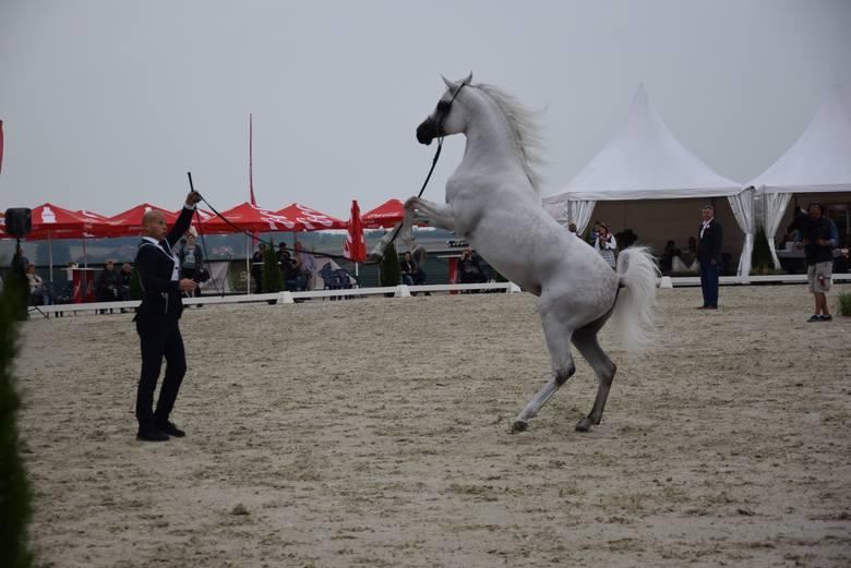 Pokaz koni arabskich w Michałowicach. Wieża Nimf uznana za najpiękniejszą [ZDJĘCIA]