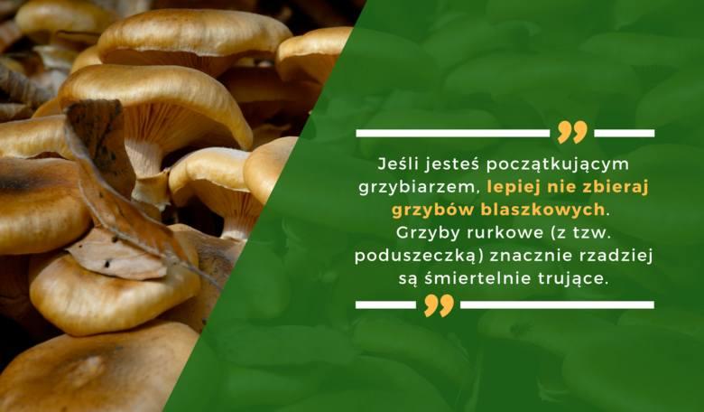 Jeśli jesteś początkującym grzybiarzem, lepiej nie zbieraj grzybów blaszkowych. Grzyby rurkowe (z tzw. poduszeczką) znacznie rzadziej są śmiertelnie