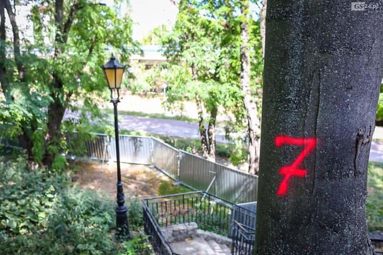 """Mówią """"nie"""" wycince drzew na północnej skarpie Zamku Książąt Pomorskich w Szczecinie. Jest apel. Co odpowiada marszałek i Zamek?"""