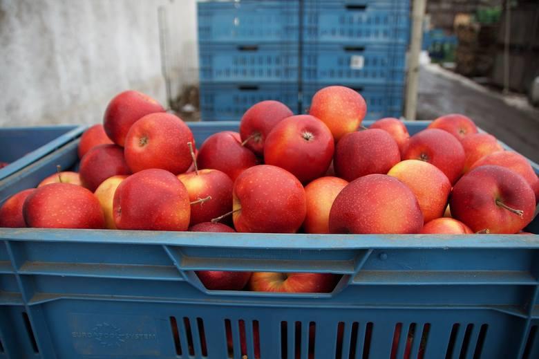 Jabłka kupione, firmy czekają na pieniądze, a wniosek o sprawdzenie jest w CBA