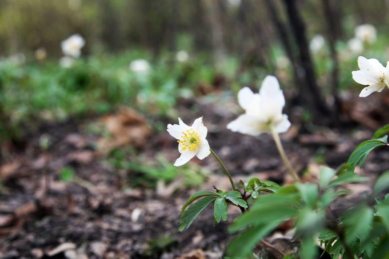 Lublin: rozejrzyj się dookoła i zobacz, jakie kwiaty zdążyły już zakwitnąć. Zobacz zdjęcia
