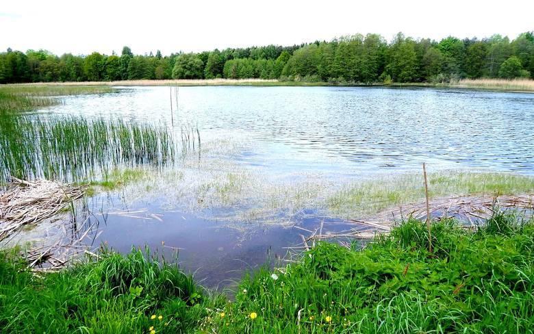 Jeziora Dankowskie, Kinołęka, czyli kraina świętego spokoju