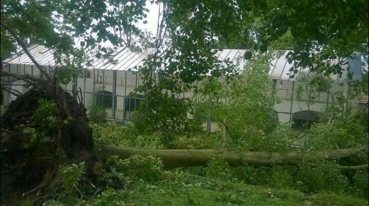 Nocna wichura poczyniła kolejne spustoszenie w zabytkowym parku w Lubostroniu. Szacuje się, że po poprzedniej i dzisiejszej nawałnicy zniszczonych jest