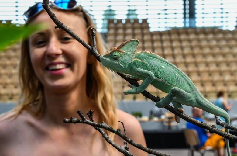 W sobotę w Hali Artego Arena przy ul. Toruńskiej odbyła się Giełda i Wystawa Zwierząt Egzotycznych. Zapraszamy do obejrzenia zdjęć.FLESZ: Pszczoły wymierają,