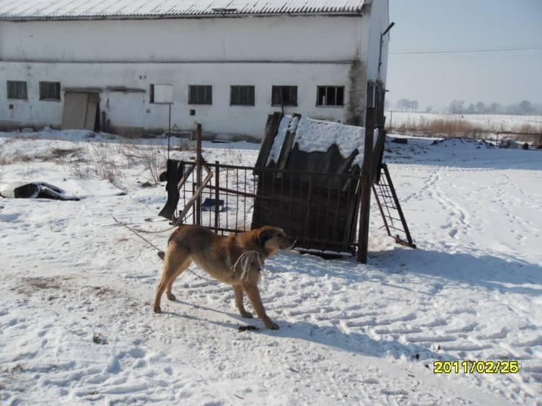 Trzymał zwierzęta w skandalicznych warunkach [zdjęcia]
