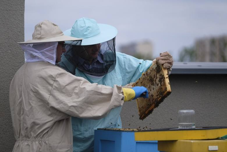 Od 2016 roku na dachu Urzędu Marszałkowskiego w Toruniu mieszkają pszczoły. Pasieka składa się z pięciu uli. Każdy zasiedlony jest przez około 40-50