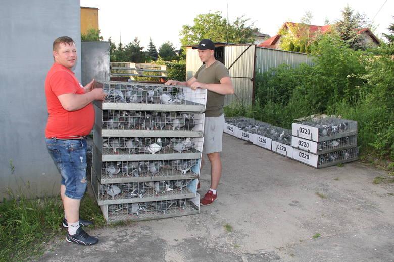 Brzezińskie gołębie pocztowe przyleciały z Niemiec