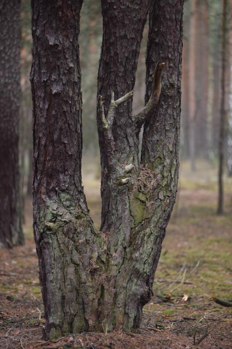 """""""Roztańczony las"""" w Zielonej Górze - 13 lutego 2019 r."""