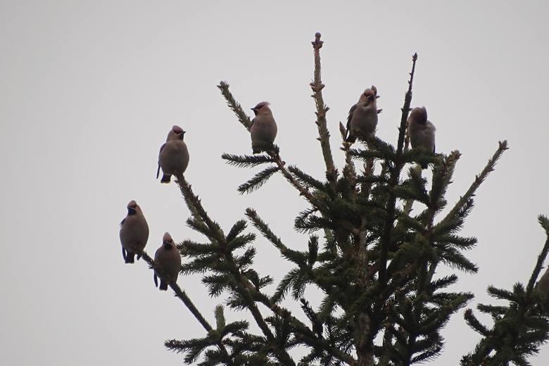 16. Zimowe Ptakoliczenie