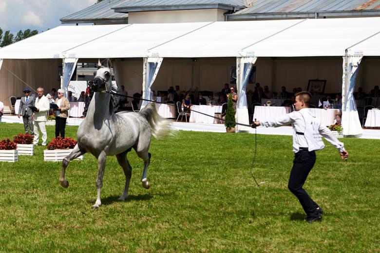 Święto koni arabskich w Janowie Podlaskim