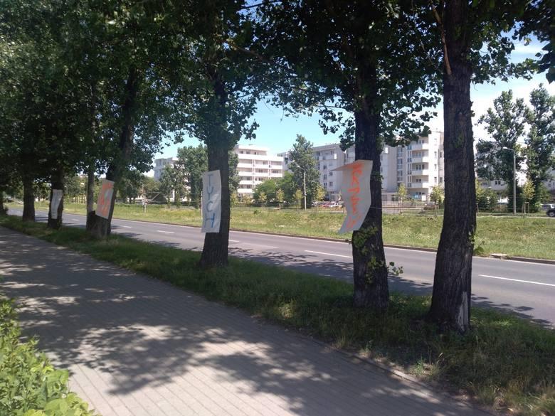 W niedzielę na drzewach rosnących przy ul. Chrobrego w Toruniu pojawiły się plakaty z apelem, aby tych drzew nie wycinać. O co chodzi?>>>>SZCZEGÓŁY