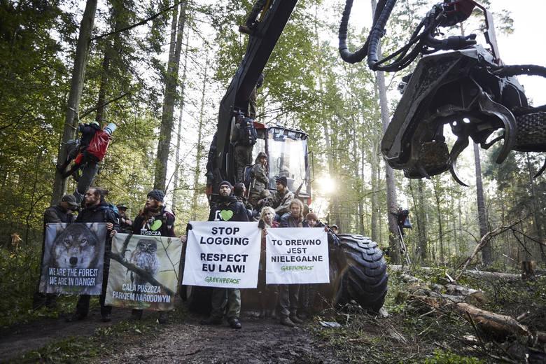 Największa blokada wycinki w Puszczy Białowieskiej (zdjęcia)