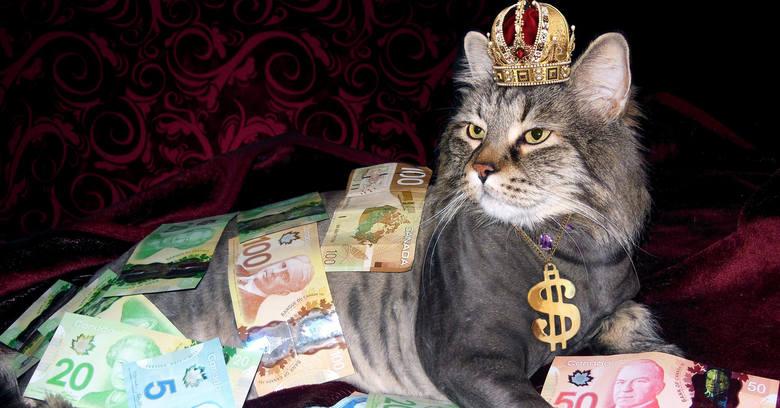 Nawet nie zgadniecie, ile można zapłacić za... kota! Ceny tych najdroższych zwalą was z nóg