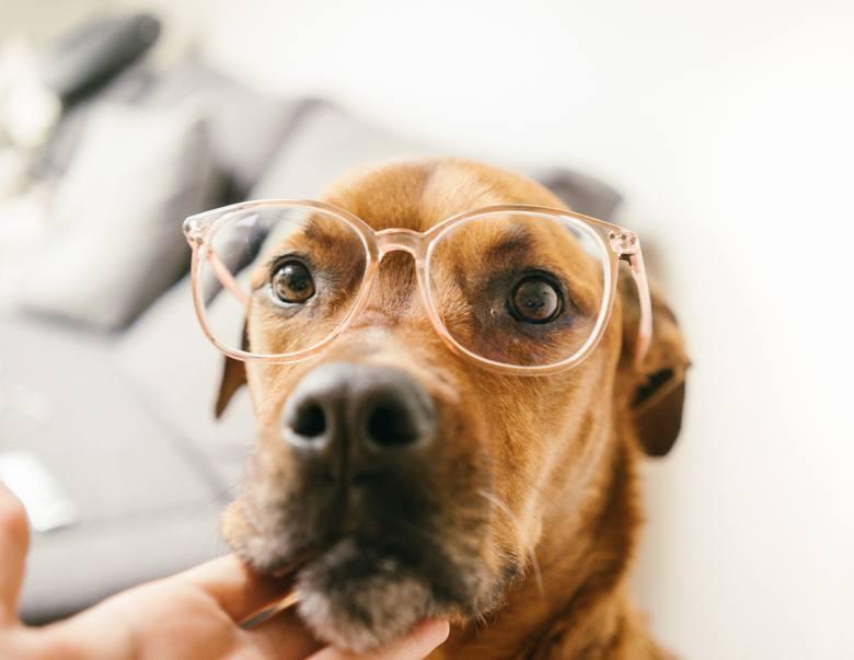 TOP11 intrygujących faktów o psach. Koniecznie sprawdź, czy je znasz!