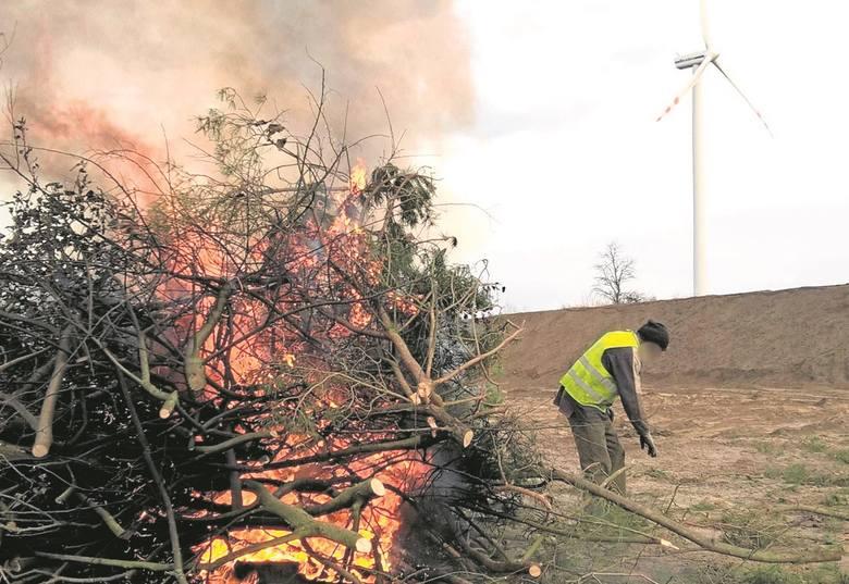 W dokumentach nie było mowy o iglakach, które płonęły na ognisku w Śniatowie, w ostatni weekend