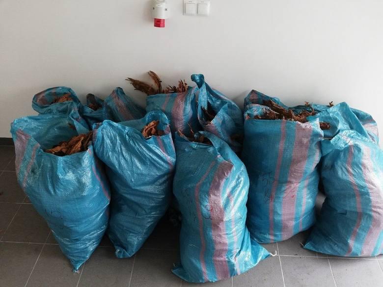 25-latkowi z Bydgoszczy grozą trzy lata więzienia. Miał w domu uprawę konopi i magazynek marihuany
