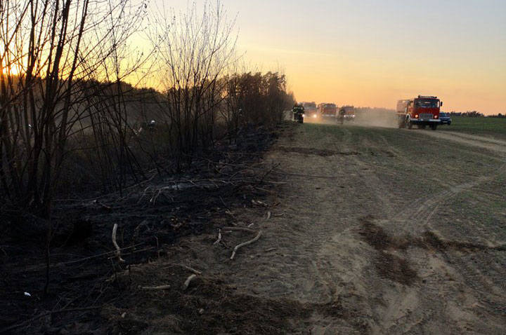 W niedzielę popołudniu w okolicach Kłanina doszło do pożaru lasu. W jego gaszeniu udział brało siedem jednostek straży pożarnej oraz samolot i śmigłowiec