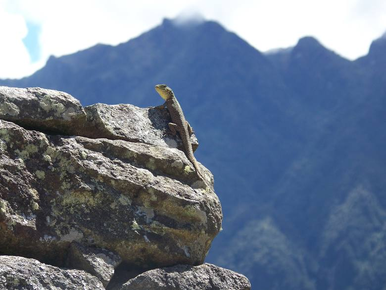 Nowosolanka w Machu Picchu