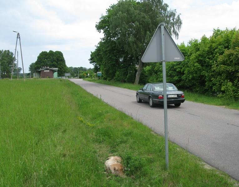 Czytelnik ze Słosinka (gm. Miastko) alarmuje, że od 1 czerwca nikt nie chce zabrać z pobocza drogi potrąconej łani. Zwierzę gnije, rozszarpują je ps