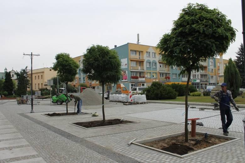 Trwa rewitalizacja Rynku w Oleśnie. Nasadzone zostały już nowe drzewa.