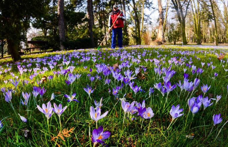 20 marca 2017: wiosna od dziś. Natura już to wie!