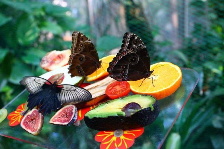 Wystawa motyli w Palmiarni Poznańskiej