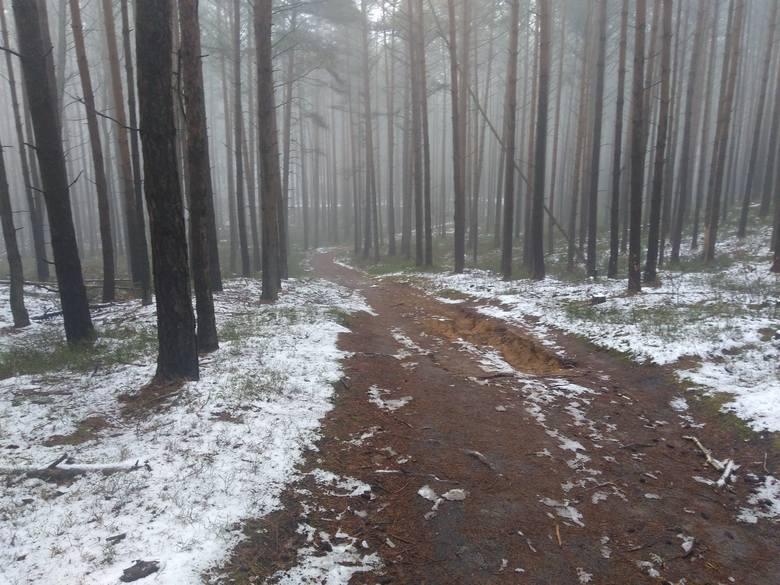 Wzgórza Piastowskie w Zielonej Górze we mgle. Zobacz tajemniczy las niczym z dawnych baśni!
