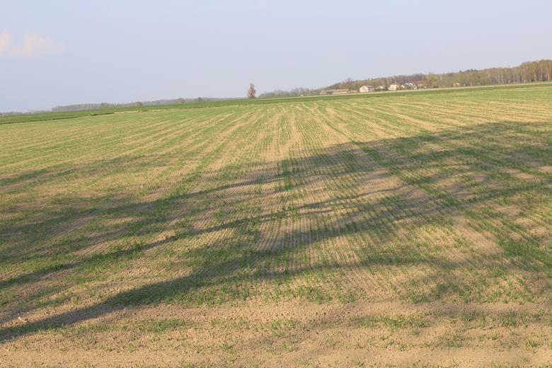 Susza 2019 - Mazowsze. Rolnicy z północnego Mazowsza martwią się o plony