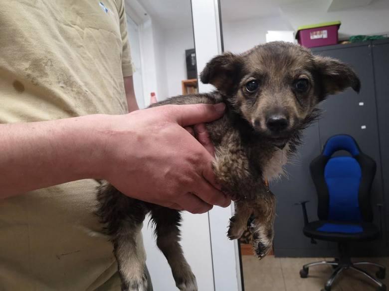 Schronisko dla zwierząt w Toruniu ponownie otworzyło się na wszystkich, którzy chcą adoptować czworonogi. Te psy przyjęto w toruńskim przytulisku od